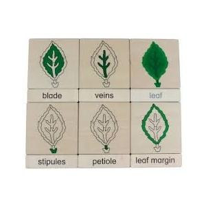tarjetas clasificación 3 partes HOJA