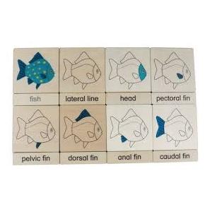 tarjetas clasificación 3 partes PEZ
